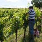 Organic wine-making in the Southwest of France