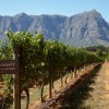 Cape Winelands low res321
